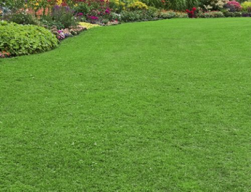 5 Steps To A Perfect Lawn