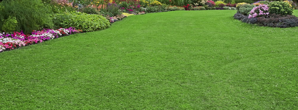 5 Steps To A Perfect Lawn Vokes