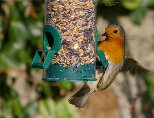 Tips for feeding your garden birds